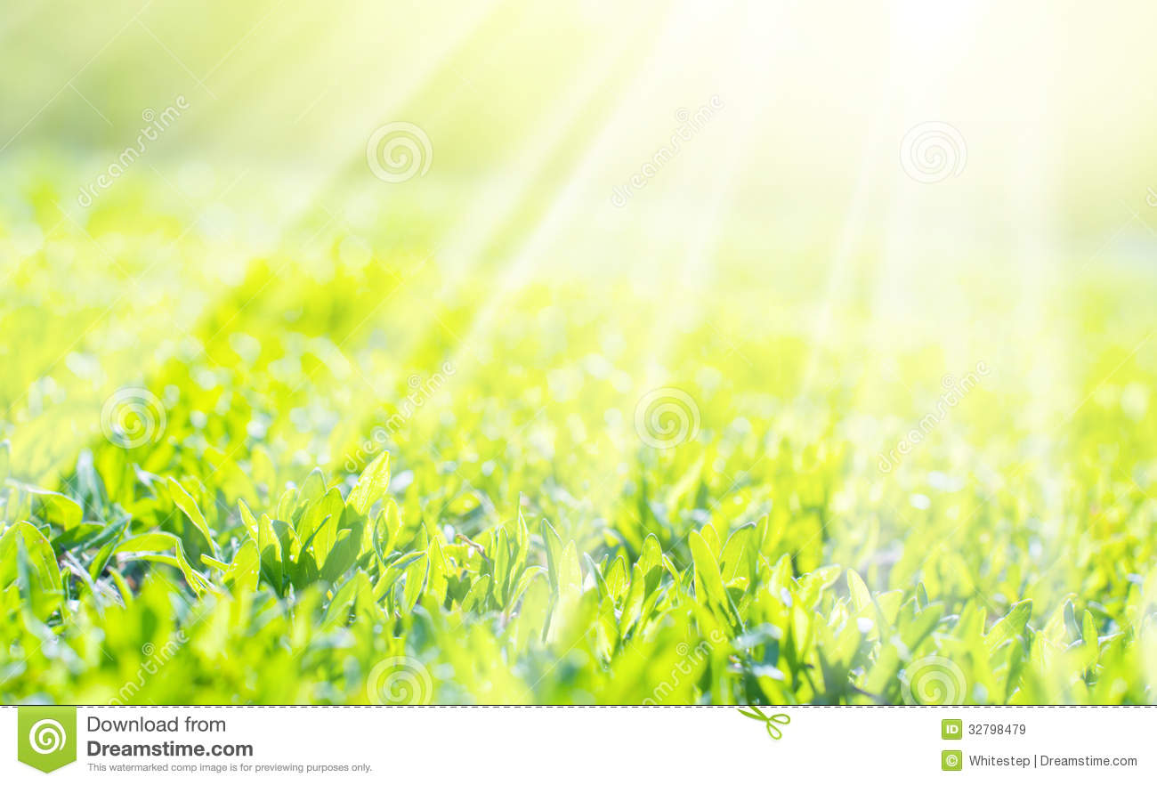 Fall Sunshine Wallpaper Field Of A Grass In Sunshine Background Royalty Free