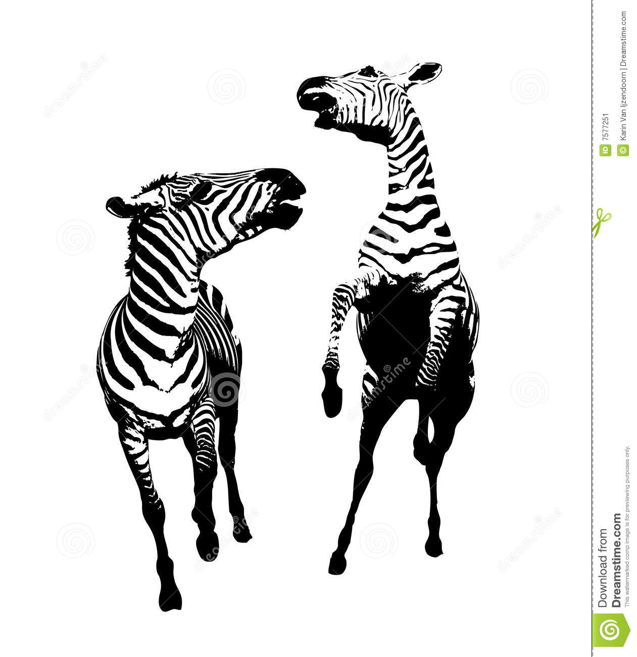 Fighting Zebra Illustration Stock Image