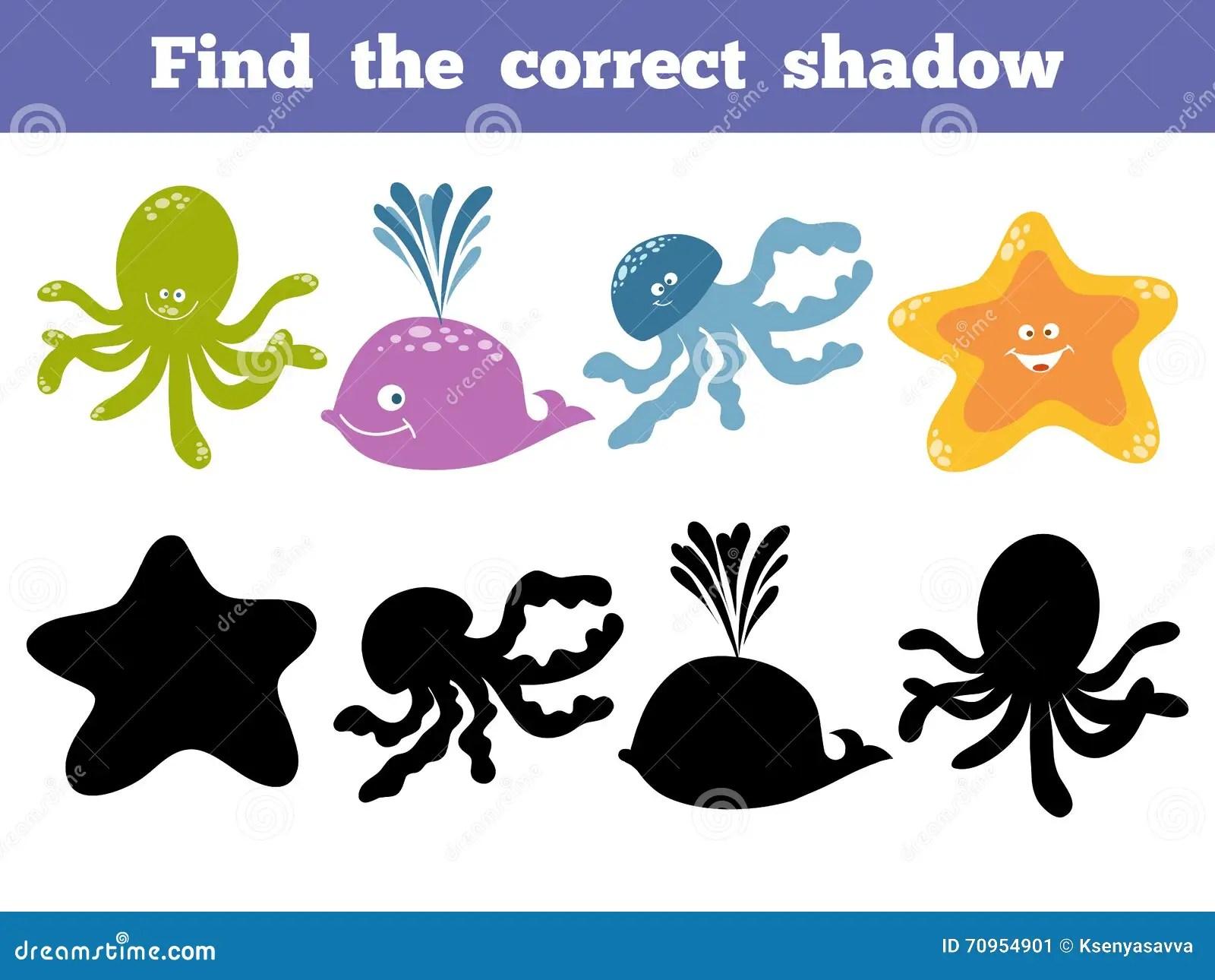 Sea Animal Collection Find Correct Shadow Cartoon Vector