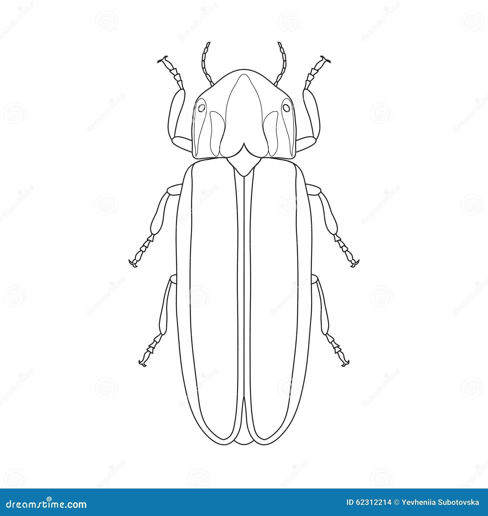 Firefly Beetle Lampyridae Sketch Of Firefly Stock Vector