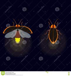 firefly bug with open and closed wings on dark background bug glowworm symbol luminous lightning bug illustration two fireflies glowing at night  [ 1300 x 1390 Pixel ]