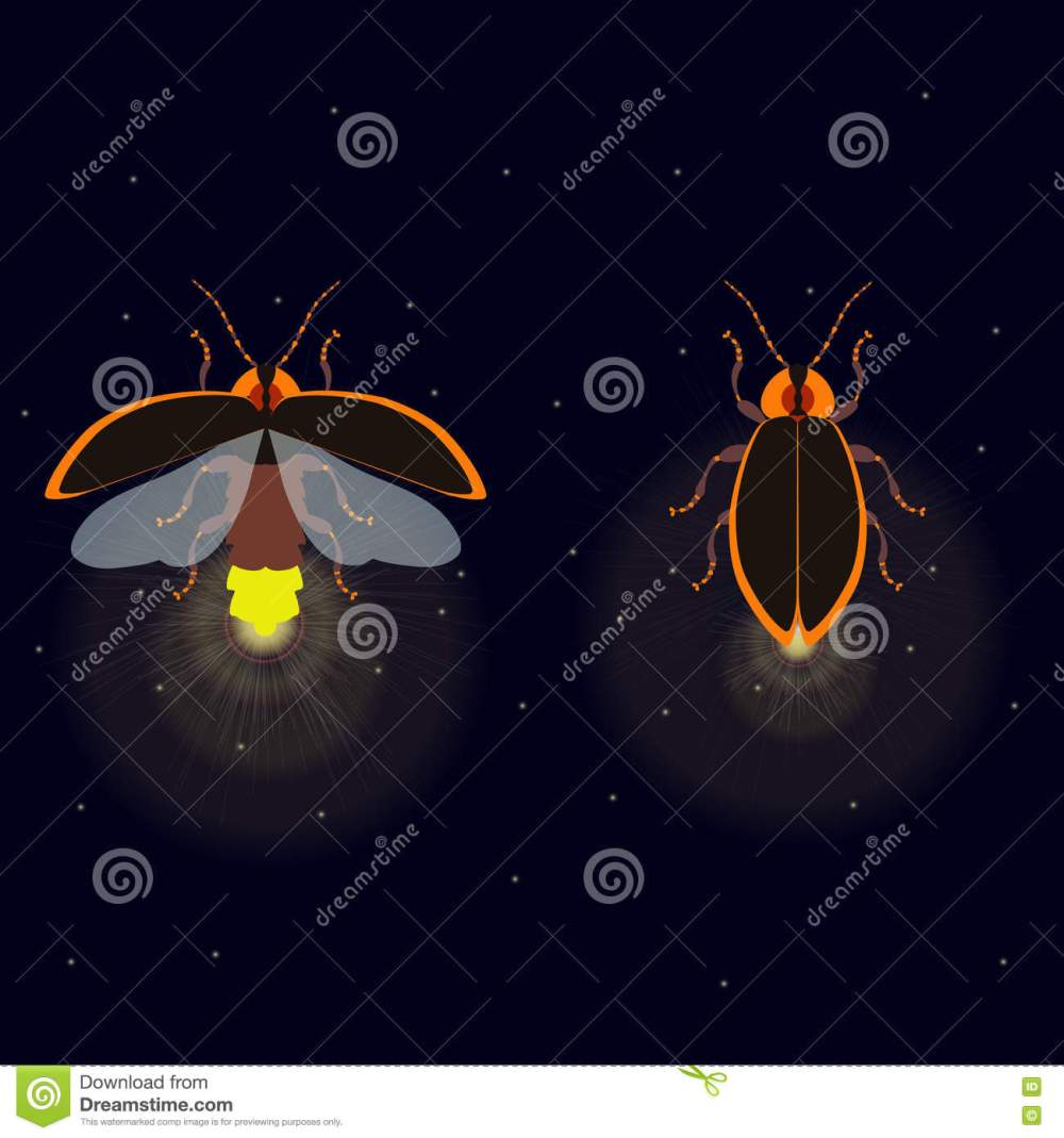 medium resolution of firefly bug with open and closed wings on dark background bug glowworm symbol luminous lightning bug illustration two fireflies glowing at night