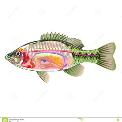 Fish Anatomy Diagram Blank Residential Electrical Service Wiring Vector Faq Labels With Businesswoman Illustration