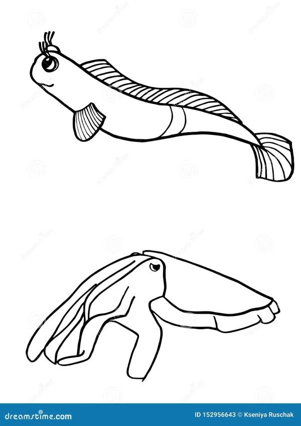 squid coloring # 17