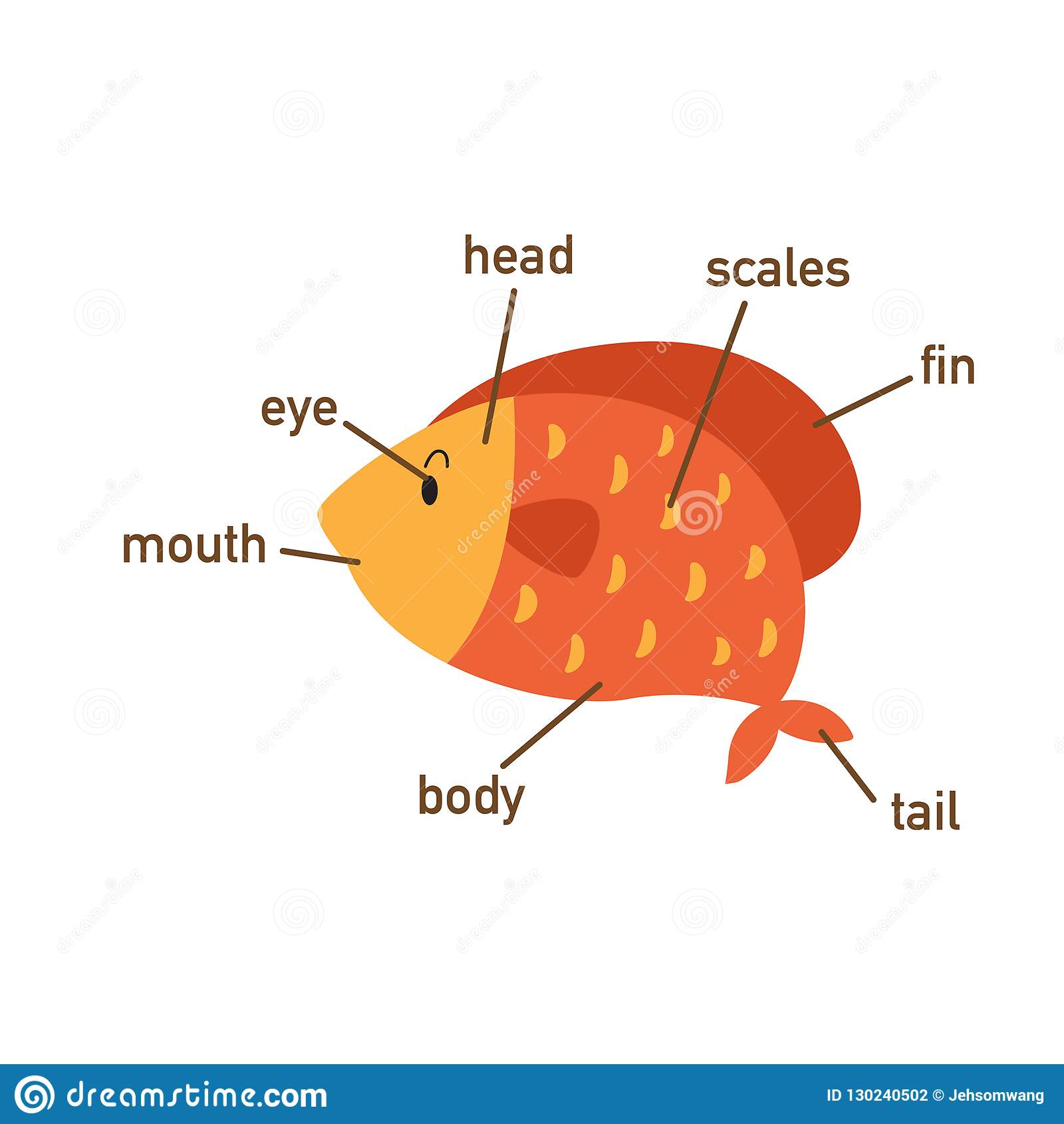 hight resolution of fish vocabulary part of body vector