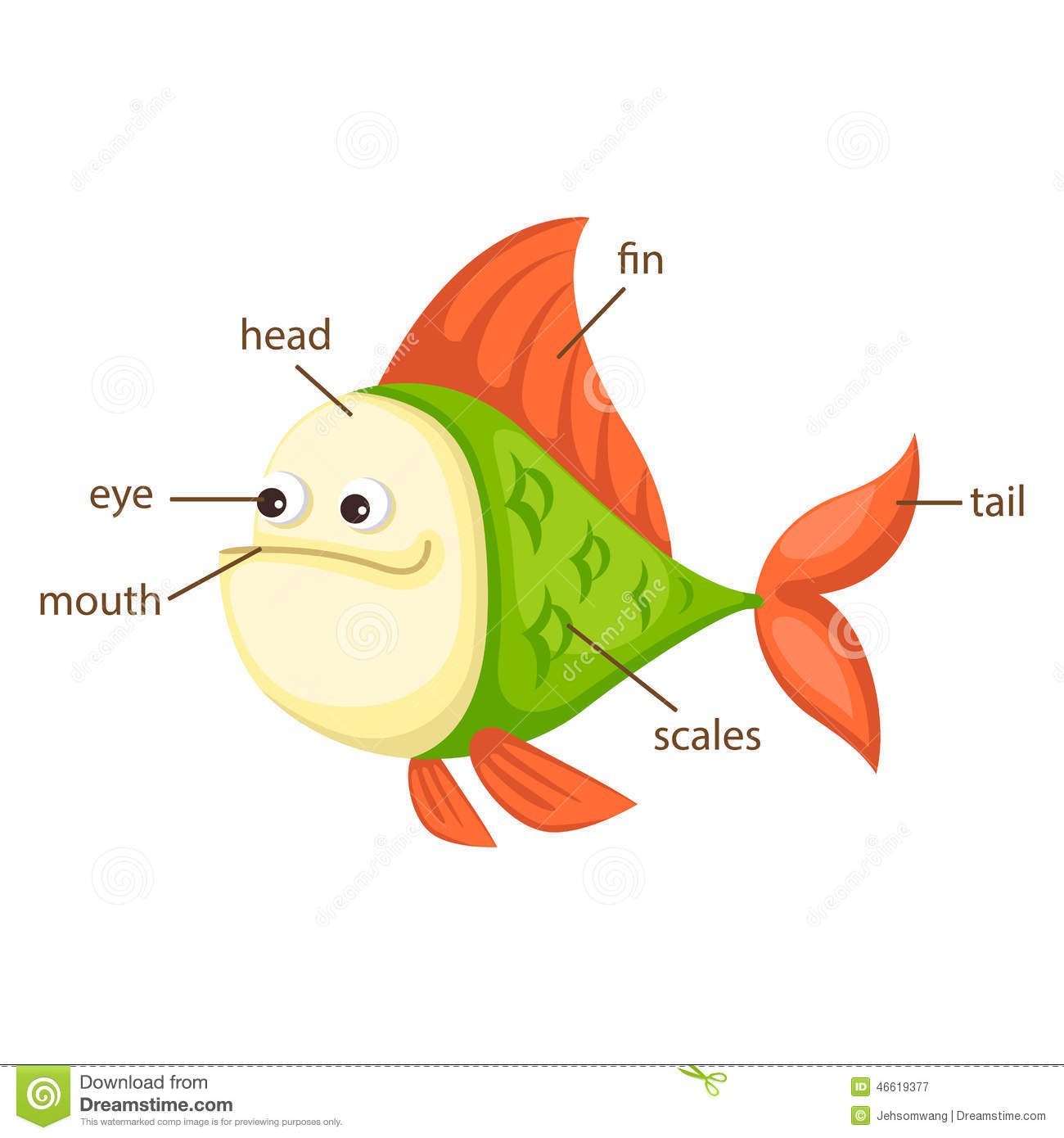 Fish Vocabulary Part Of Body Vector Stock Vector