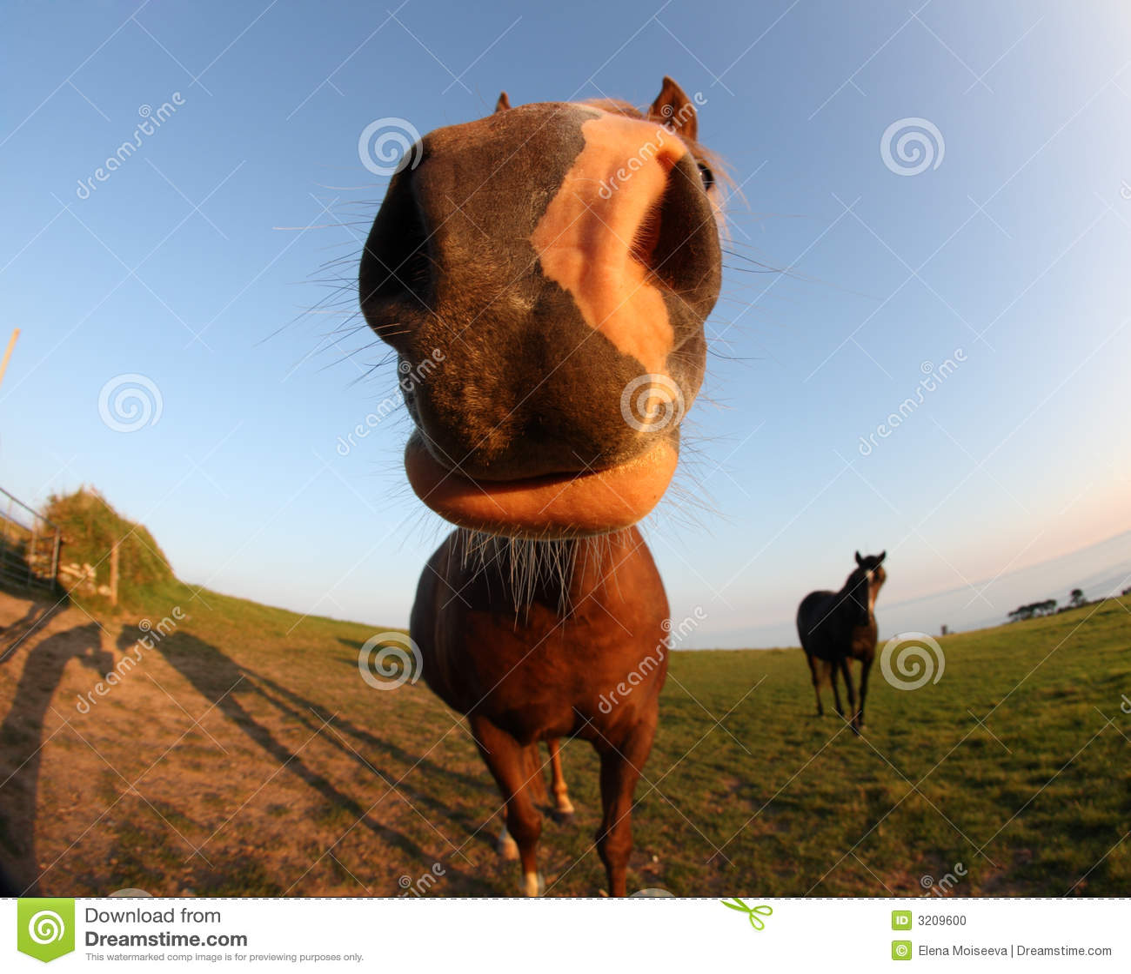 Animal Farm Wallpaper Fisheye Lens Funny Horse Stock Photo Image Of Horse