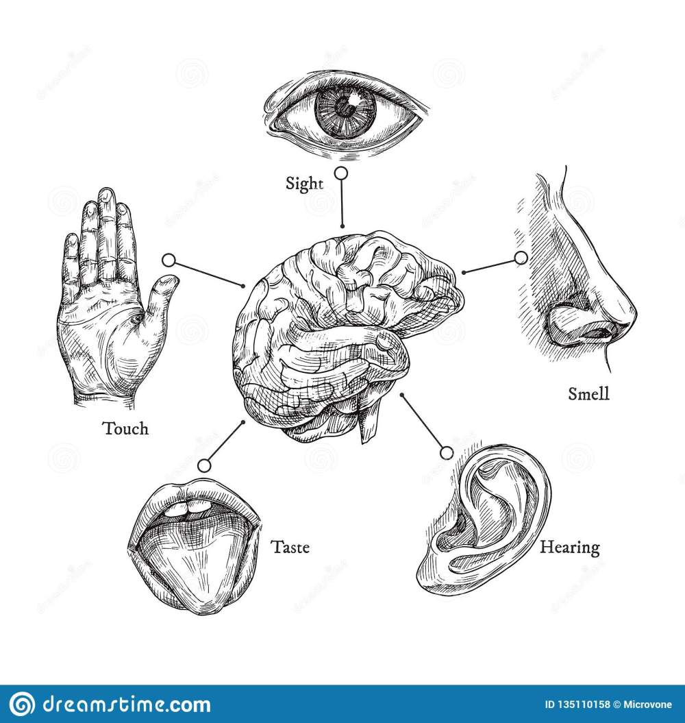 medium resolution of sketch mouth and eye nose and ear hand and brain