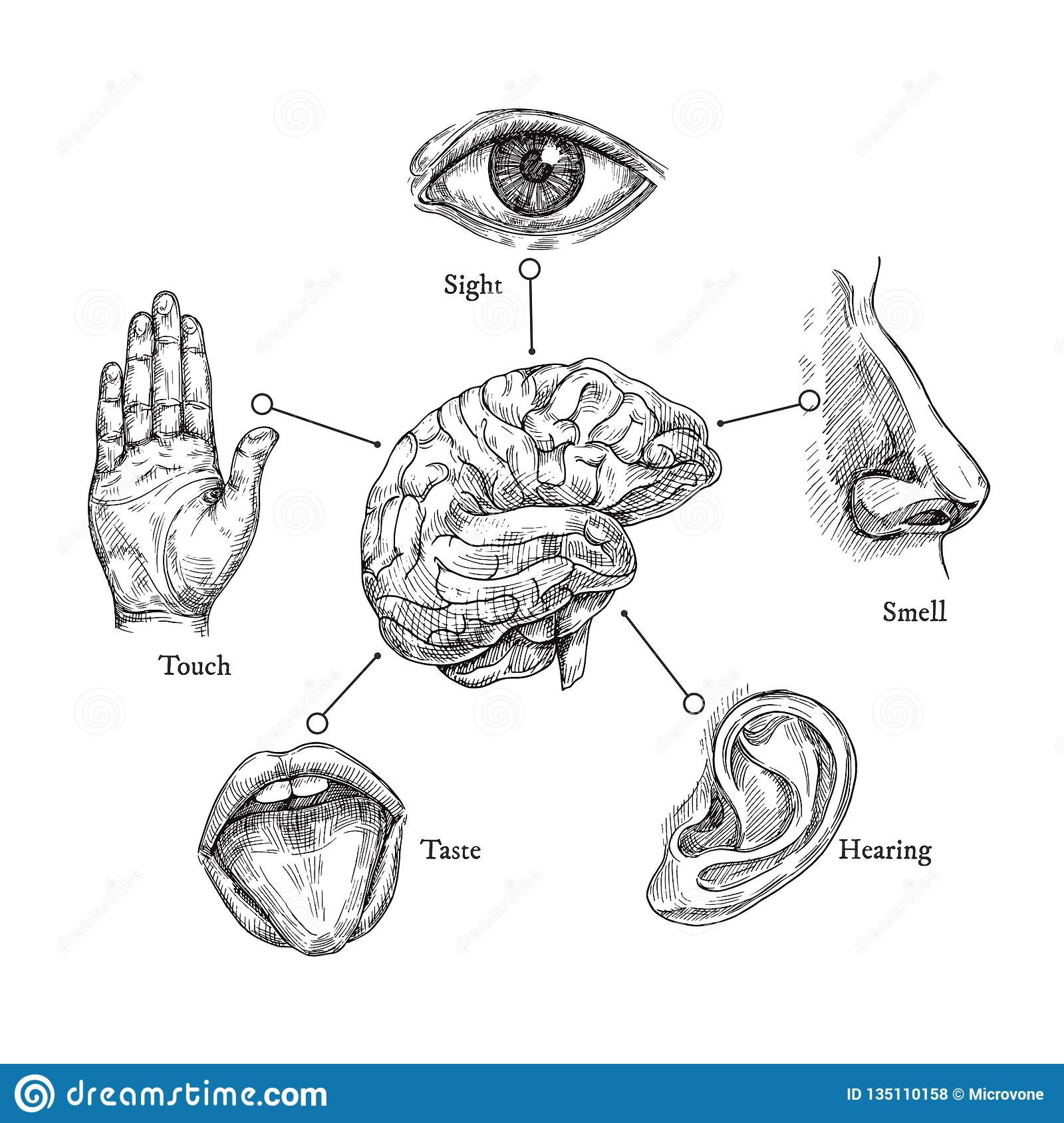 hight resolution of sketch mouth and eye nose and ear hand and brain