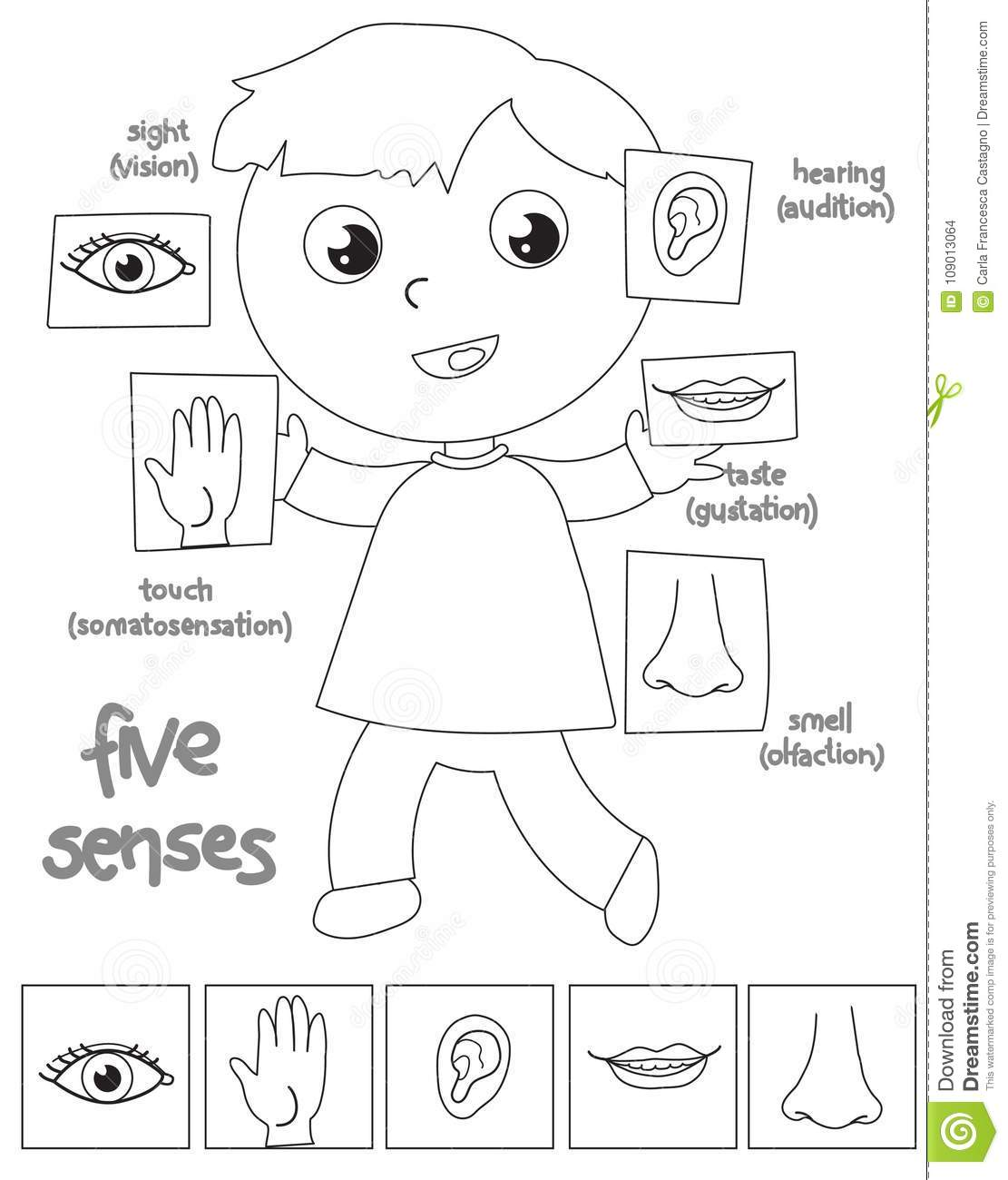 Five Senses Boy Coloring Illustration Stock Vector