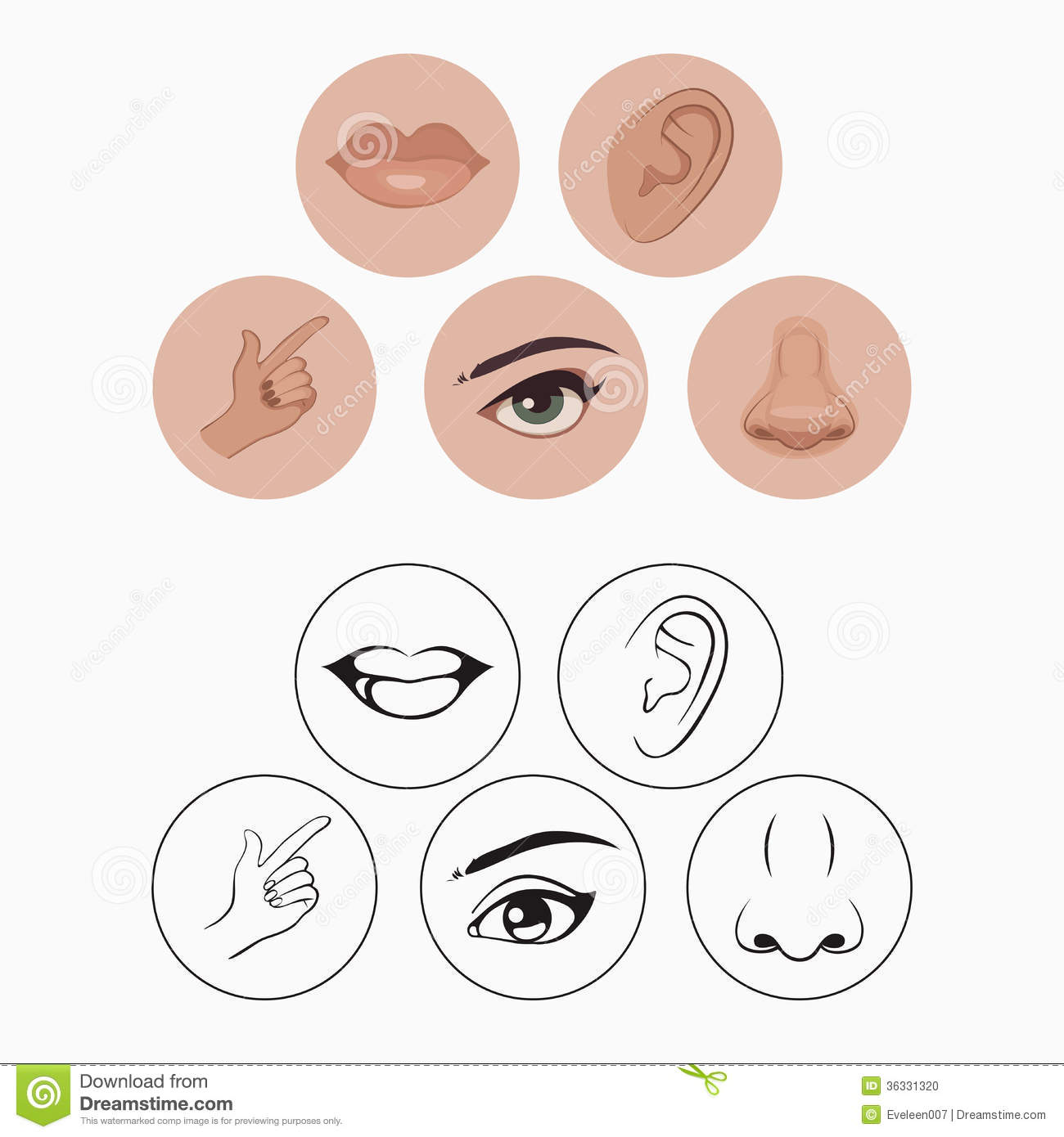 Five Senses Stock Vector Illustration Of Drawing