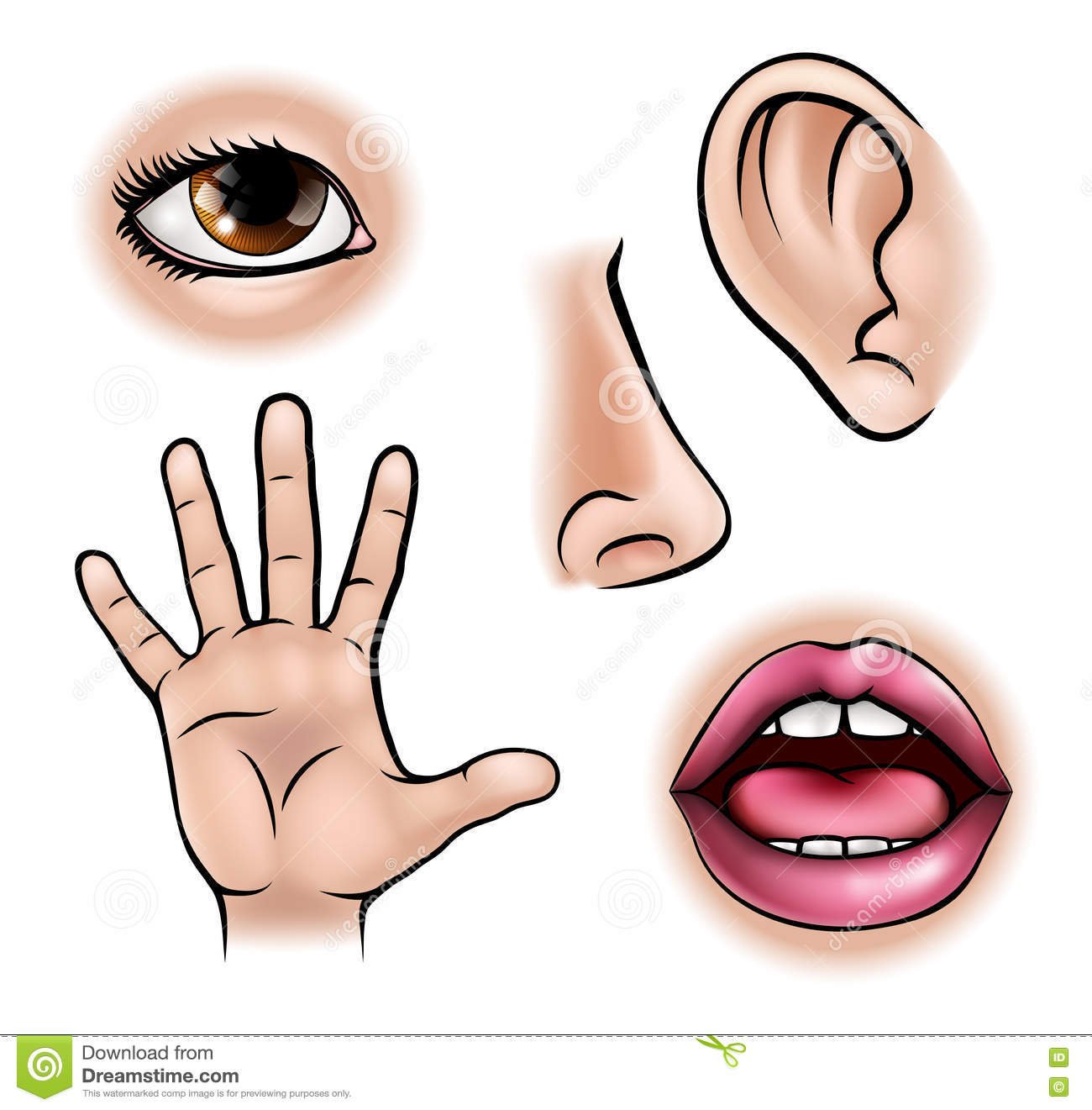 Five Senses Stock Vector Illustration Of Design Hearing