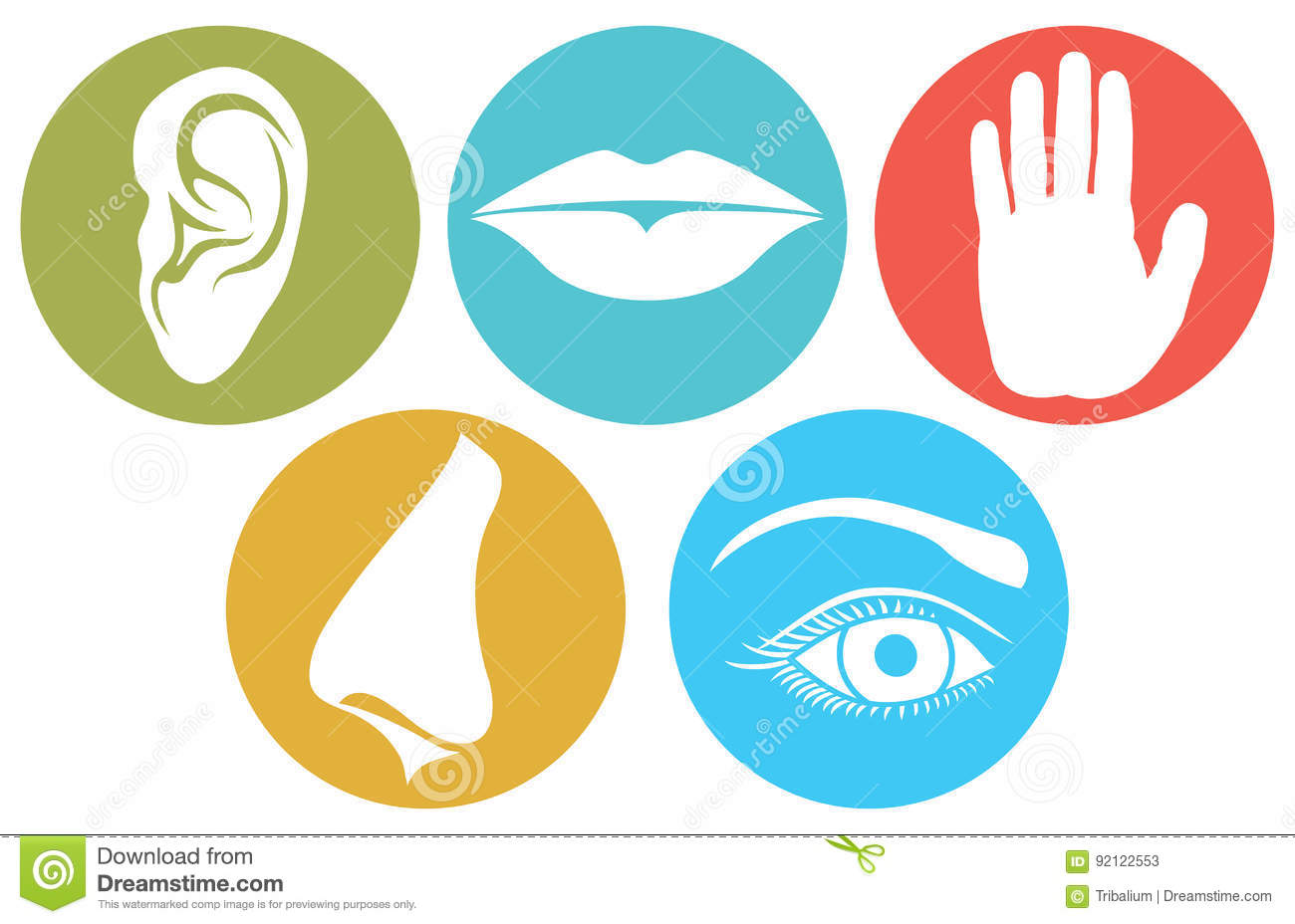 Five Senses Symbols Five Senses Vector Illustration Stock