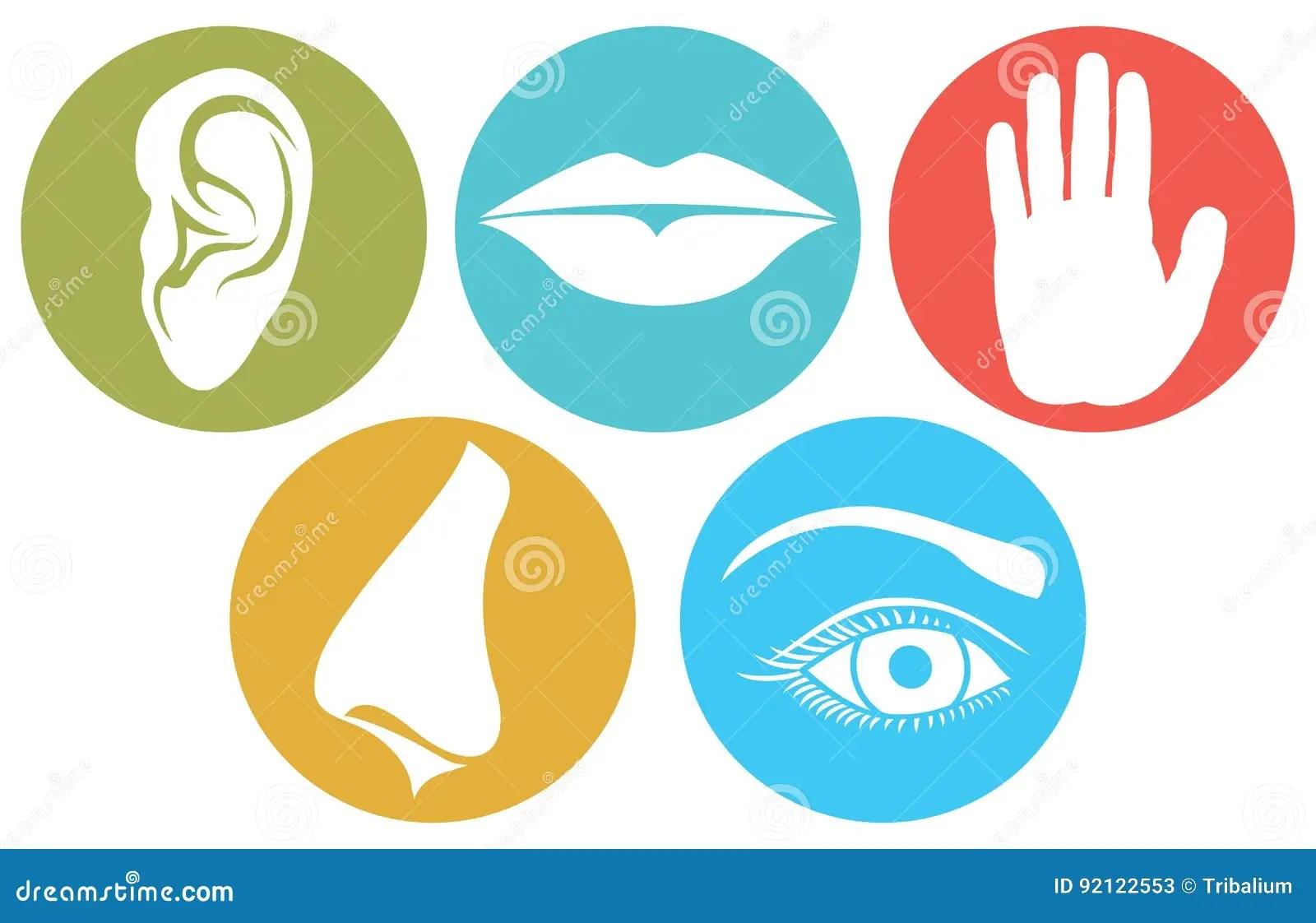 Five Senses Symbols Five Senses Vector Illustration Stock