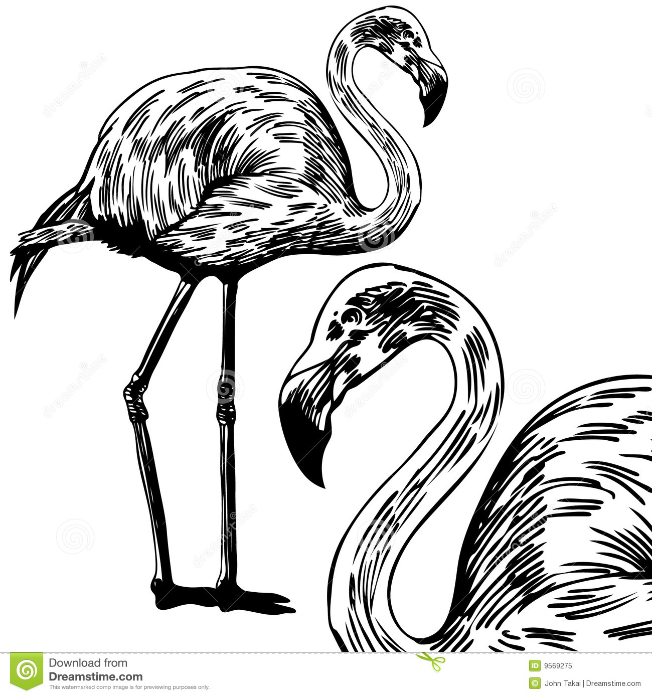 Flamingos Stock Vector Illustration Of Drawn White