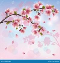 Fleur De Sakura - Fond Japonais De Cerisier Illustration ...