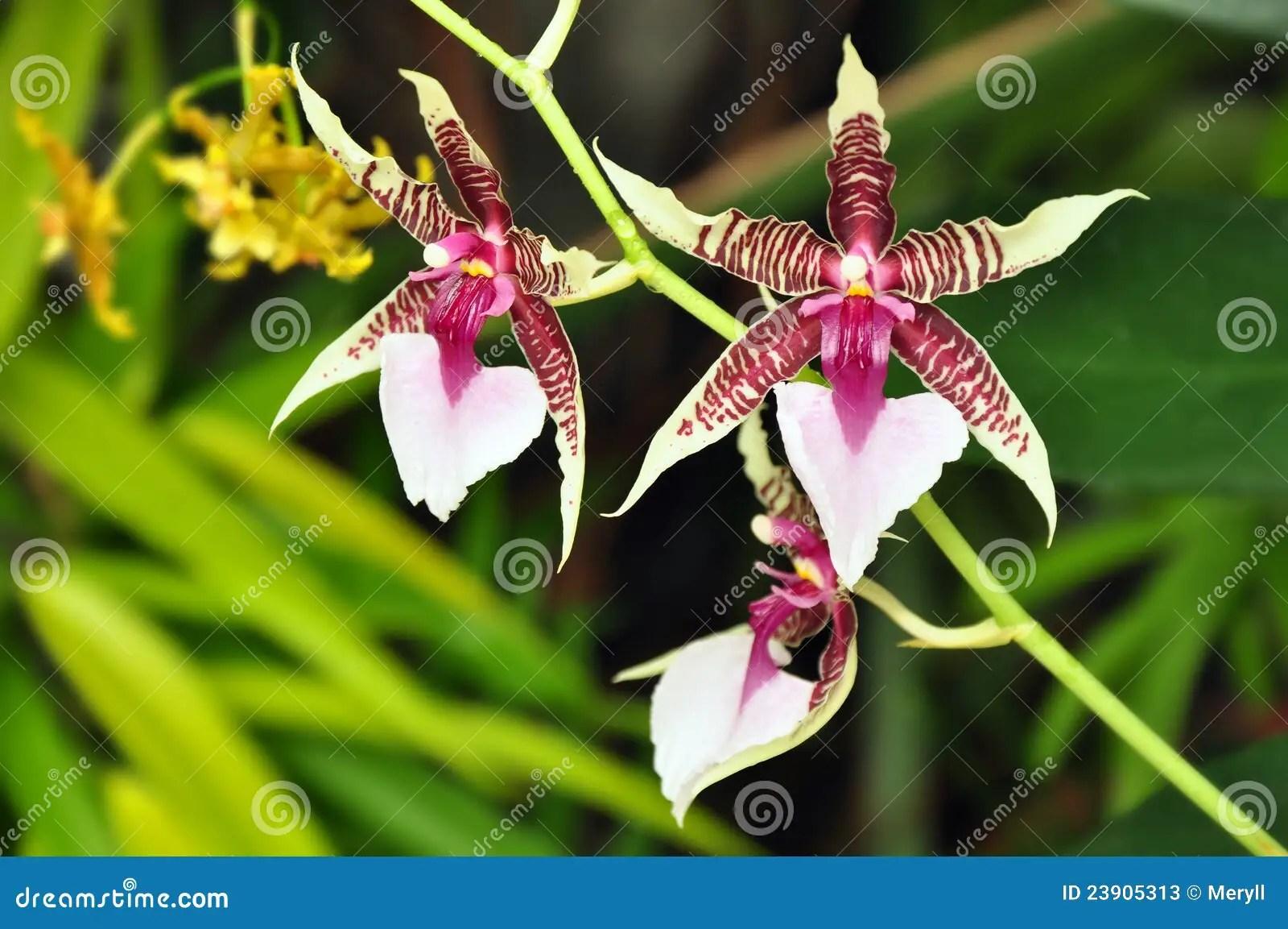 Fleur tropicale exotique image stock Image du rare fond  23905313