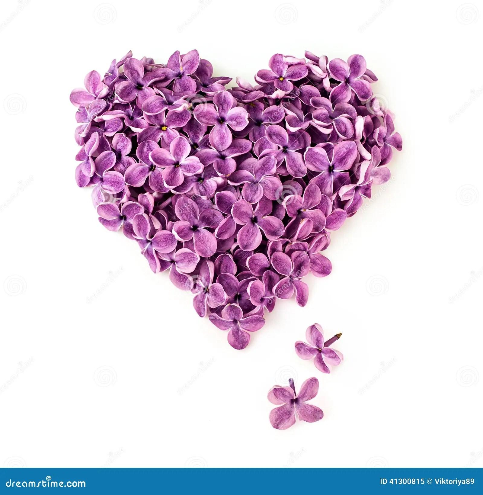 Fleurs Lilas Dans La Forme Du Coeur Photo Stock Image