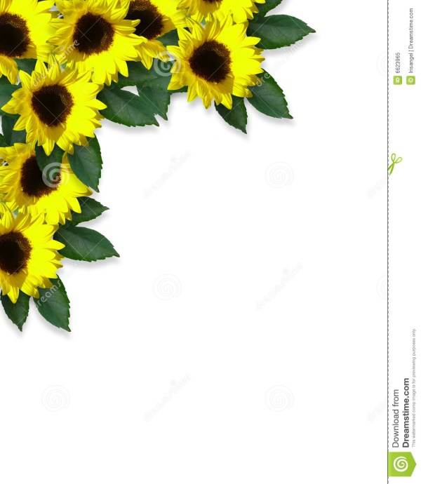 floral border sunflowers stock