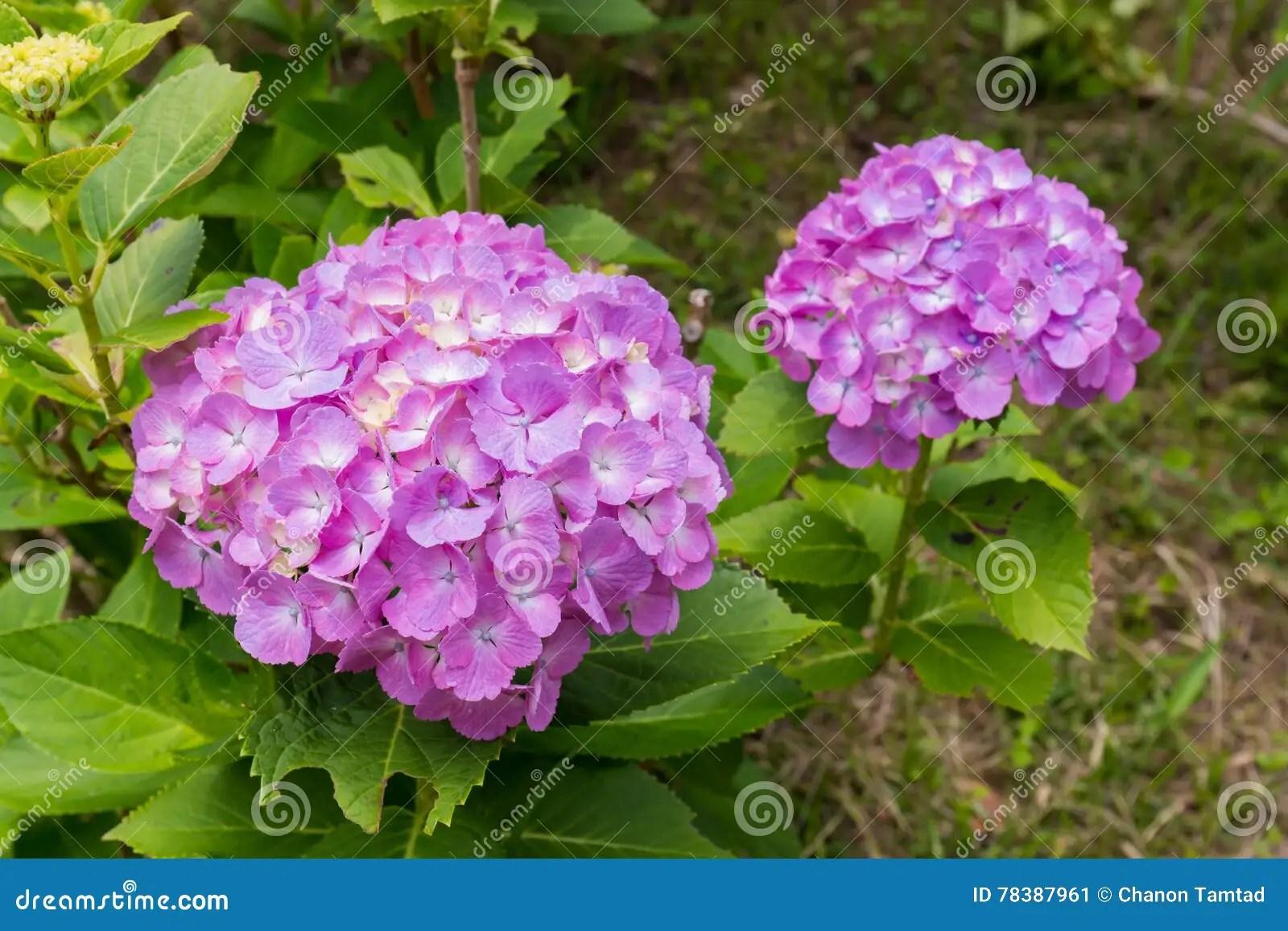En El Jardin De Las Flores | Sakura Ramifica Los Flores En Un Jardín ...