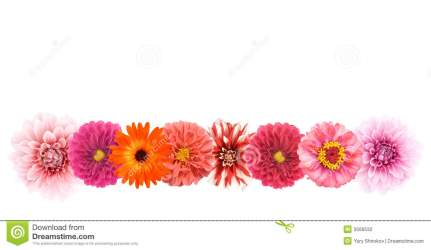 border borders flower flowers clipart lines borderline line floral bright isolated colors different