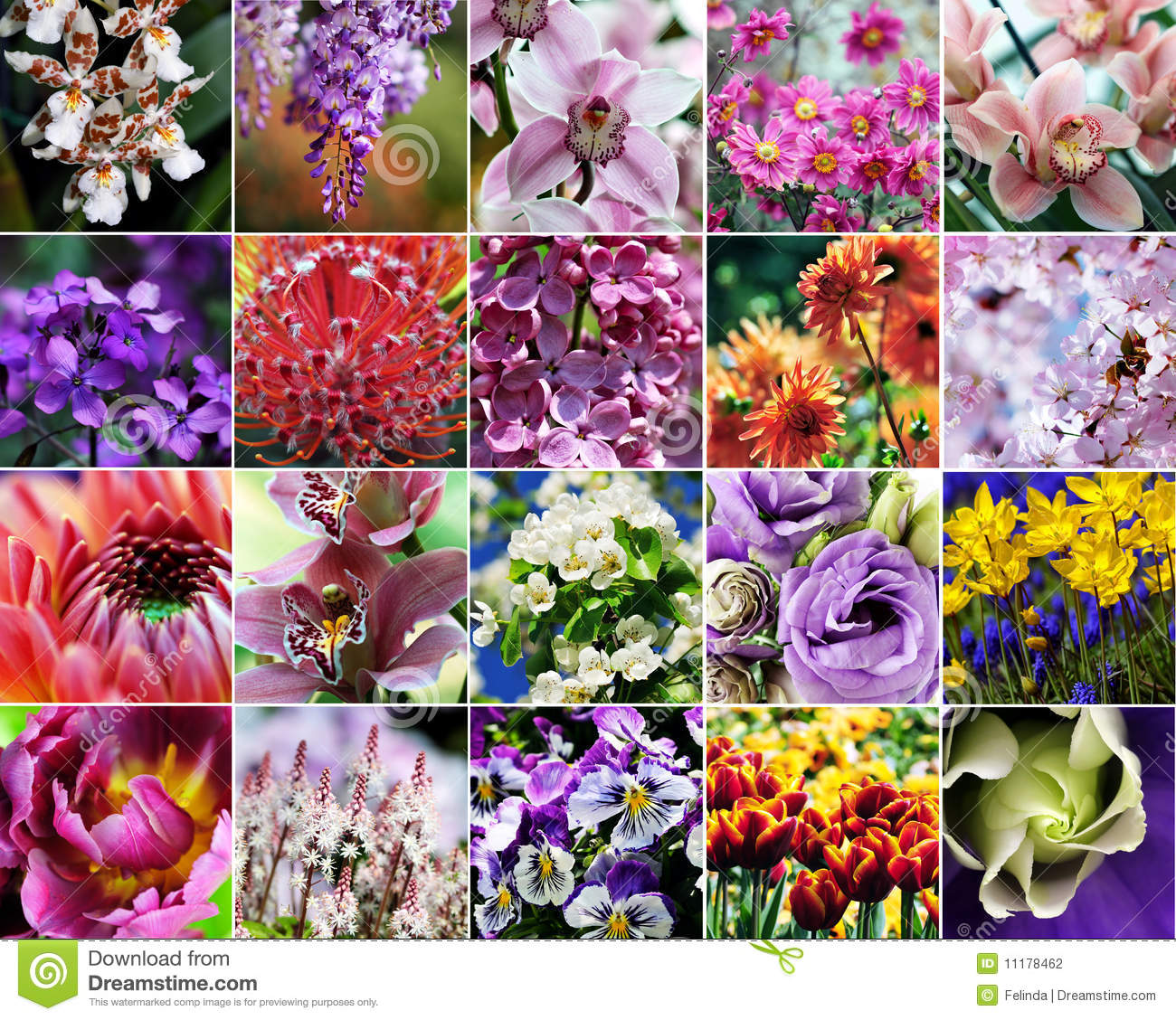 Fall Collage Wallpaper Flower Collage Stock Photo Image Of Garden Nature
