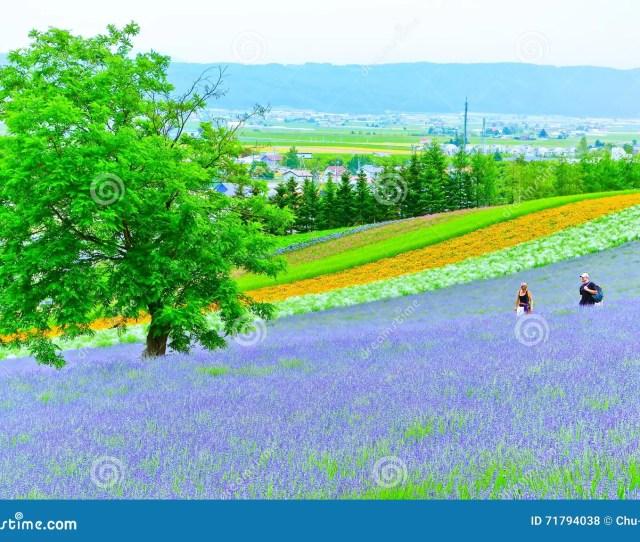 Flower Field In Summer In Hokkaido Japan