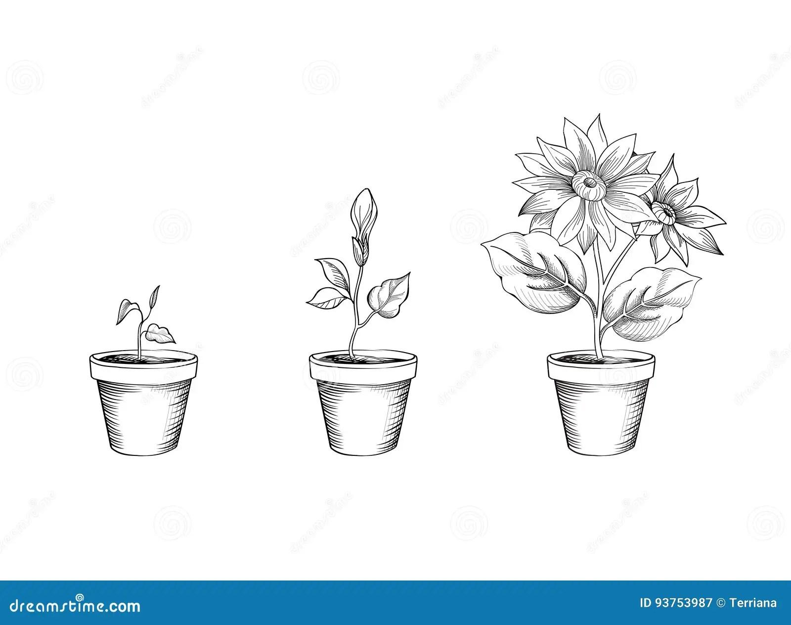 Garden Flower Growth Stages
