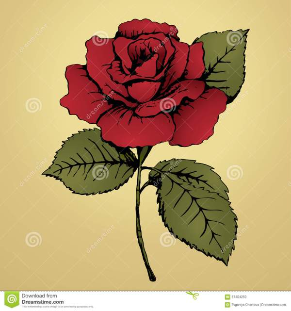 Rose Flower with Stem Drawing