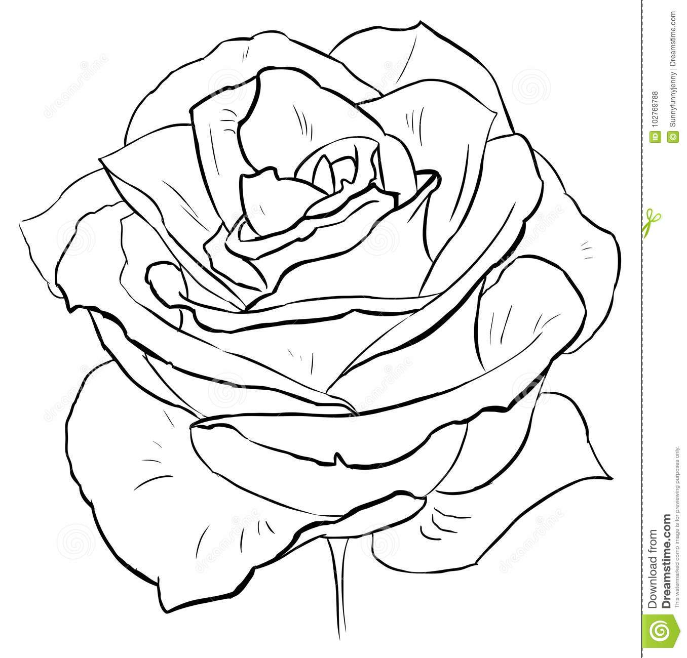 Flower Petals Page 11 Coloring Pages