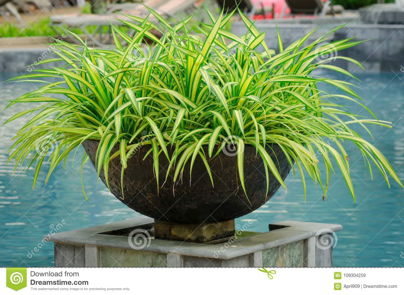 Decoration Jardin Pot Flowerpot Decoration At Swimming Pool Stock Image Image Of