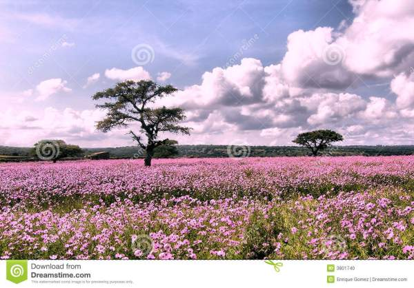 flowers landscape stock