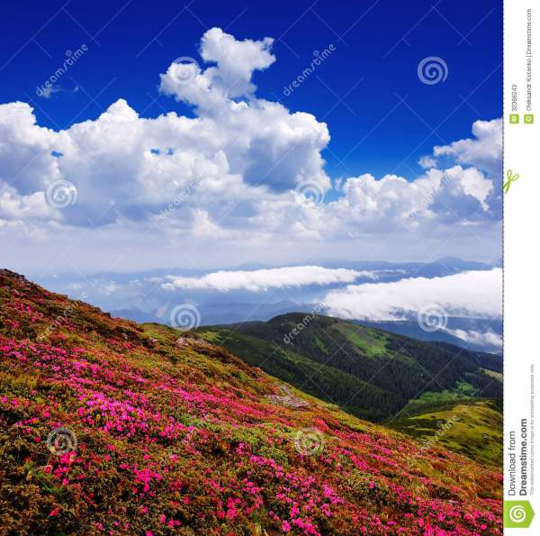 flowers in mountain valley stock