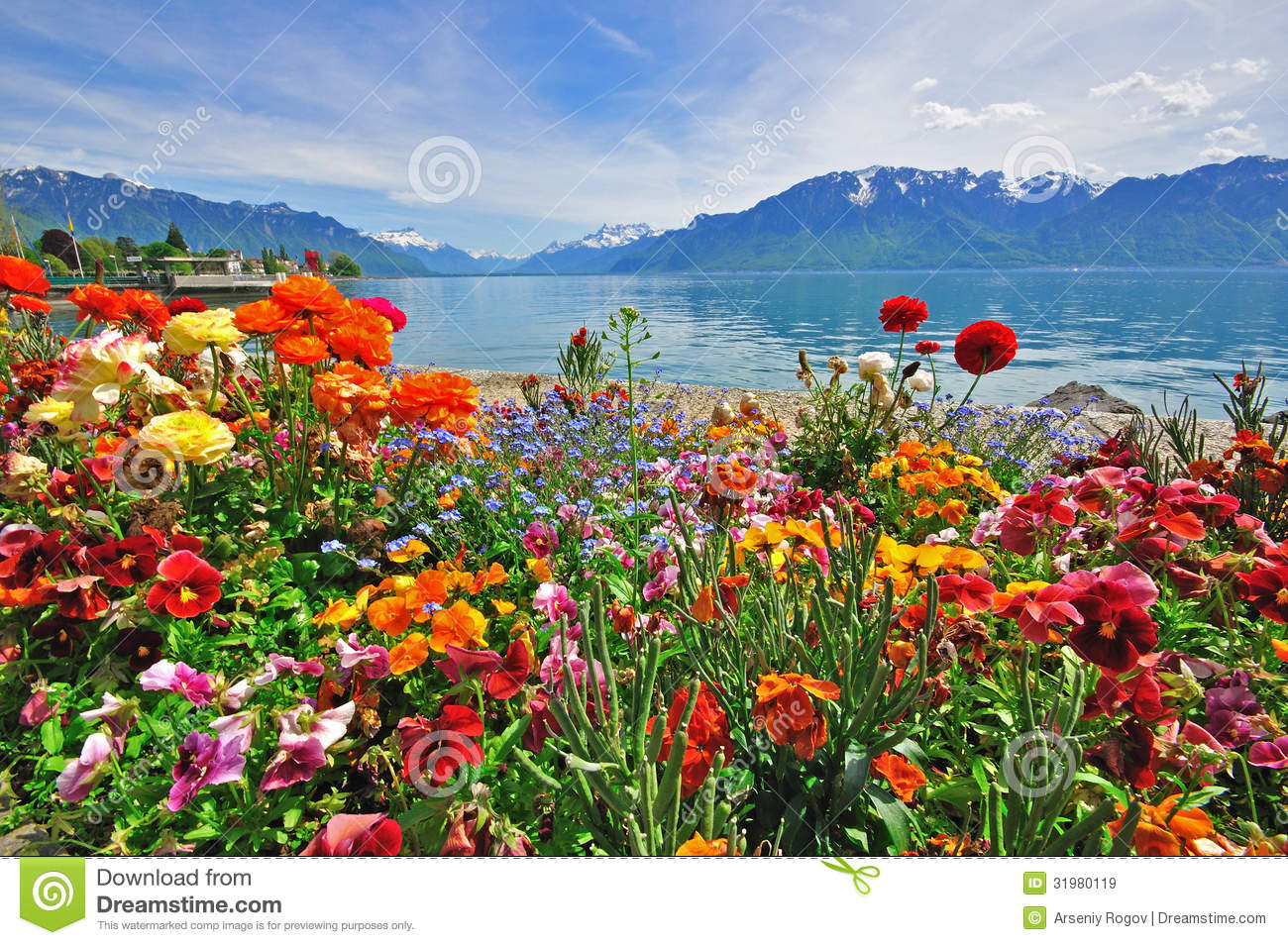 Flowers in swiss Alps stock image Image of scenery