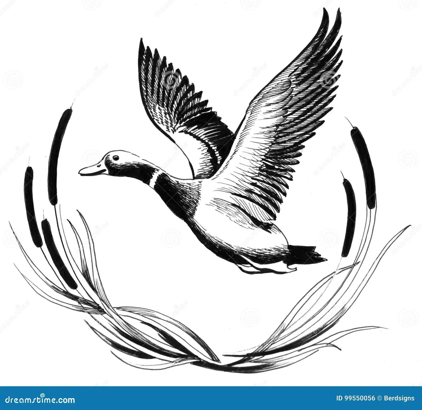 Flying Duck Stock Illustration Illustration Of Hunting
