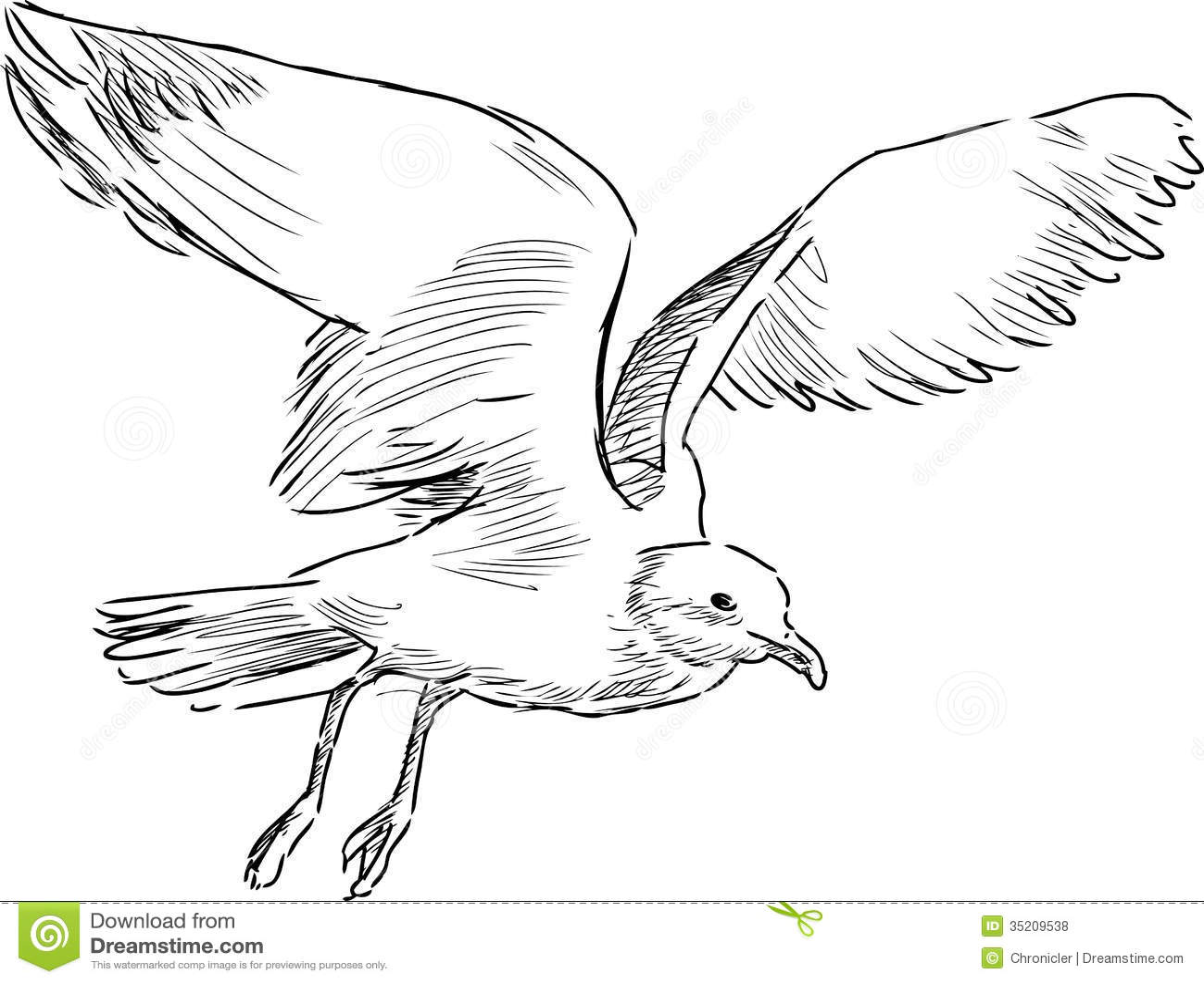 Flying Gull Royalty Free Stock Photos Image 35209538