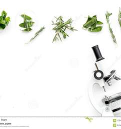 food analysis pesticides free vegetables herbs rosemary mint near rosemary flower rosemary herb diagram [ 1300 x 957 Pixel ]