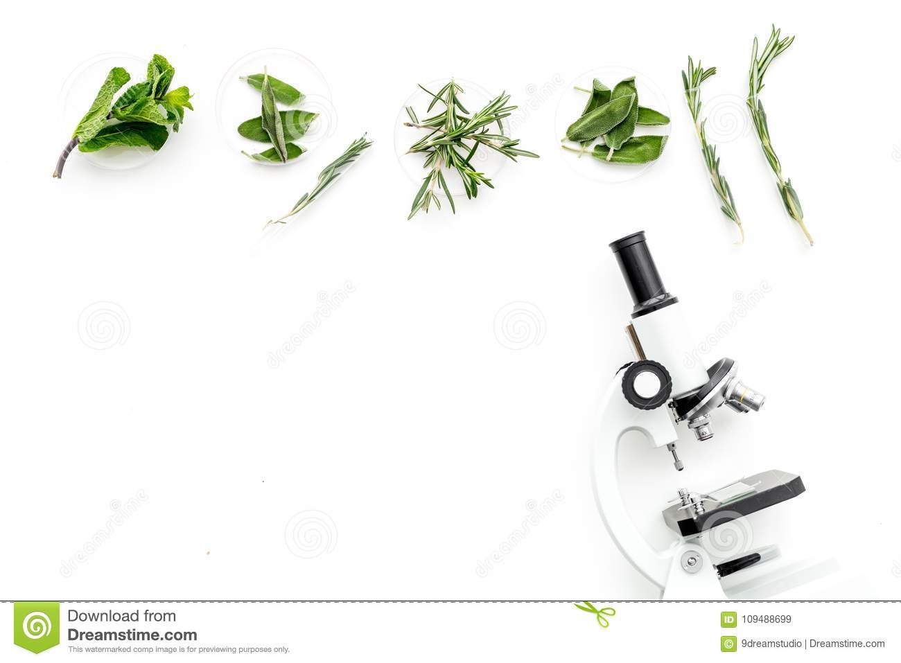 hight resolution of food analysis pesticides free vegetables herbs rosemary mint near rosemary flower rosemary herb diagram