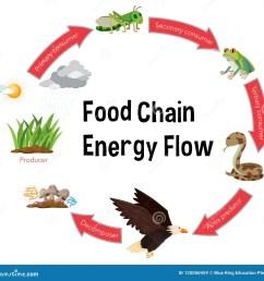 food chain energy flow diagram [ 1300 x 1276 Pixel ]
