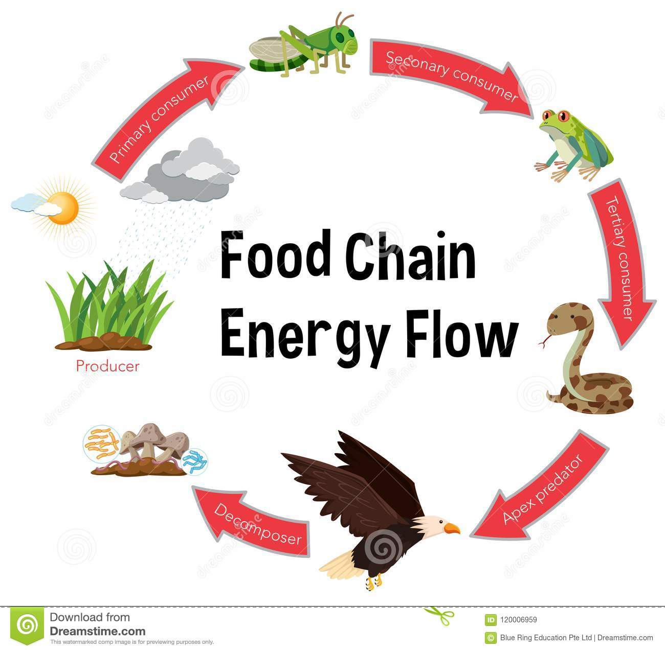 hight resolution of food chain energy flow diagram
