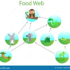 Easy Food Chain Diagram Vw Tiguan Radio Wiring Web Stock Vector Illustration Of Green Rabbit