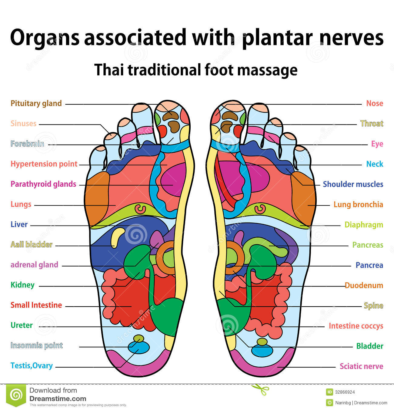pressure points diagram massage big tex trailer wire foot stock vector illustration of detail care