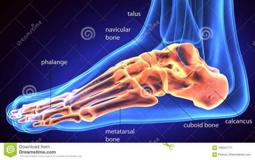 small resolution of 3d rendering medical illustration of the feet bone