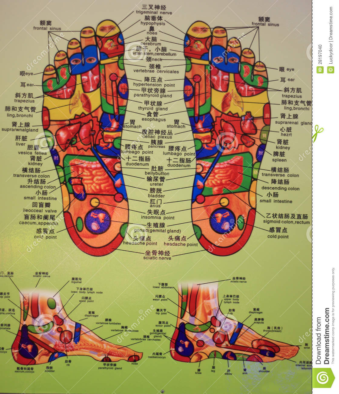 foot massage therapy diagram 1999 sv650 wiring chart editorial image