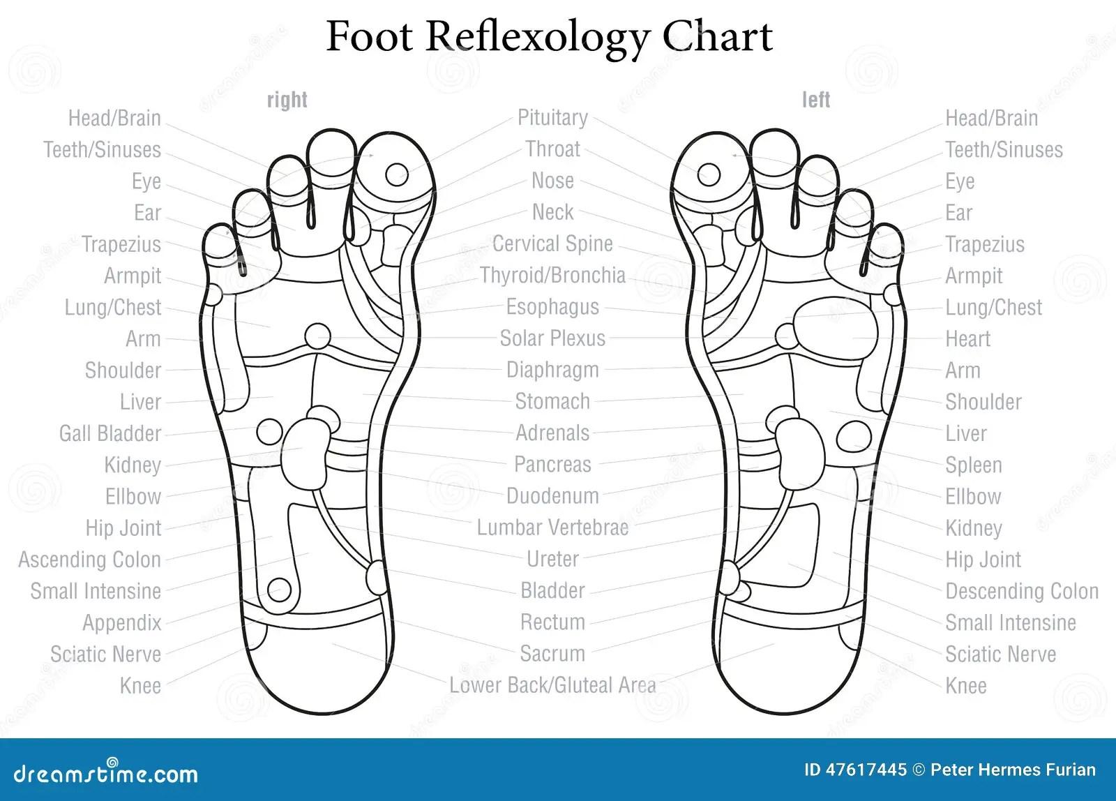 Foot Reflexology Chart Outline Stock Vector