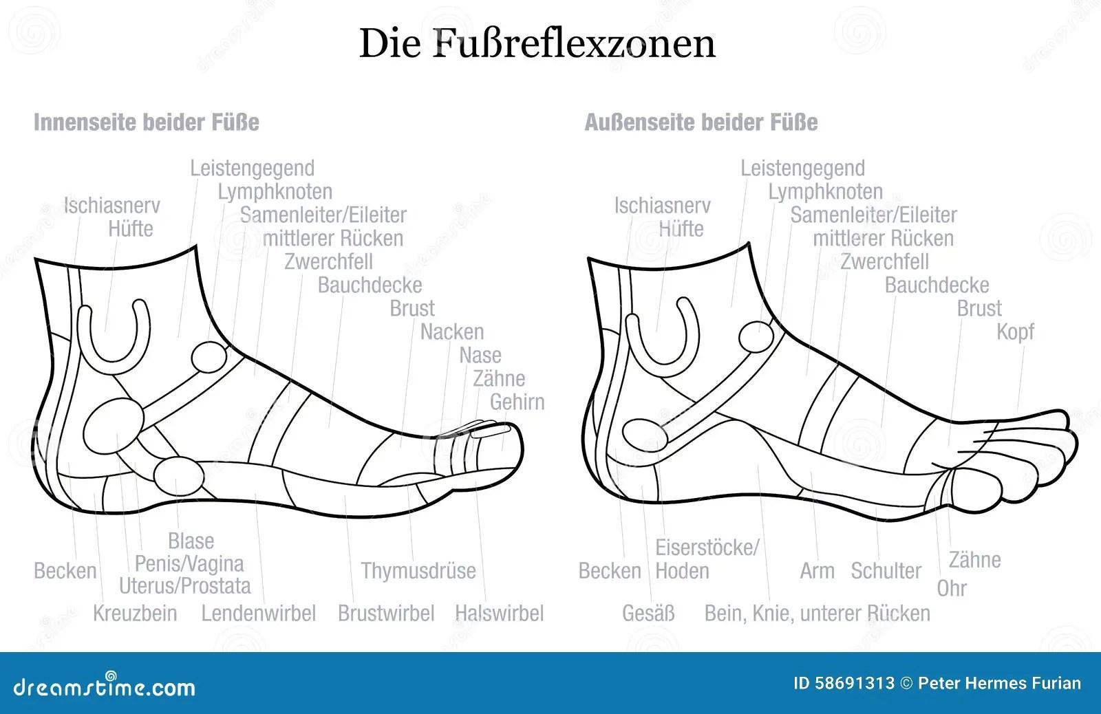Foot Reflexology Side Profile View Description German
