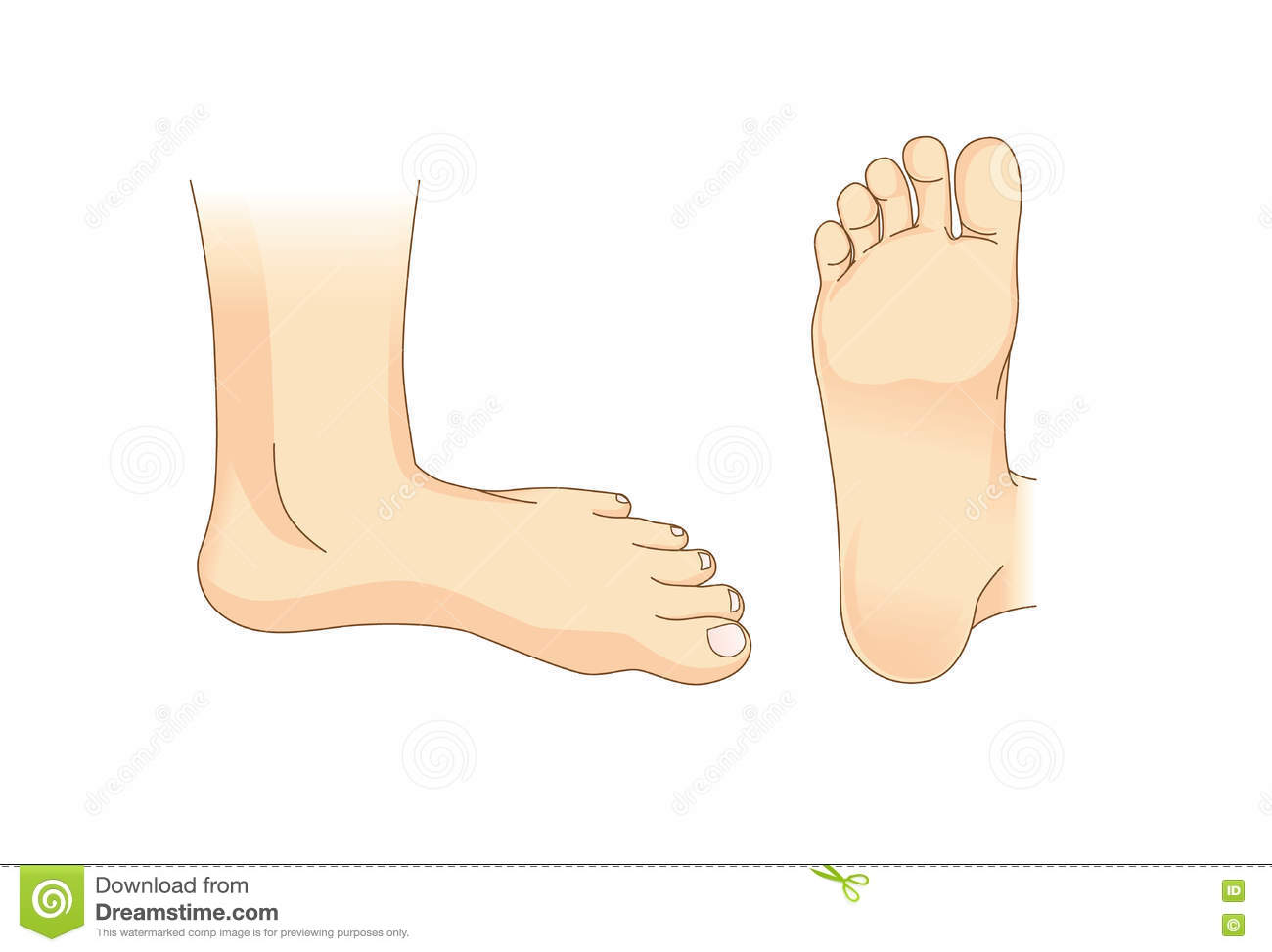 hight resolution of foot vector in side view and bottom of foot illustration about foot care