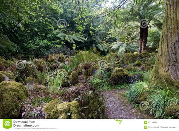 Forest Garden With Tree Ferns Cork County Stock