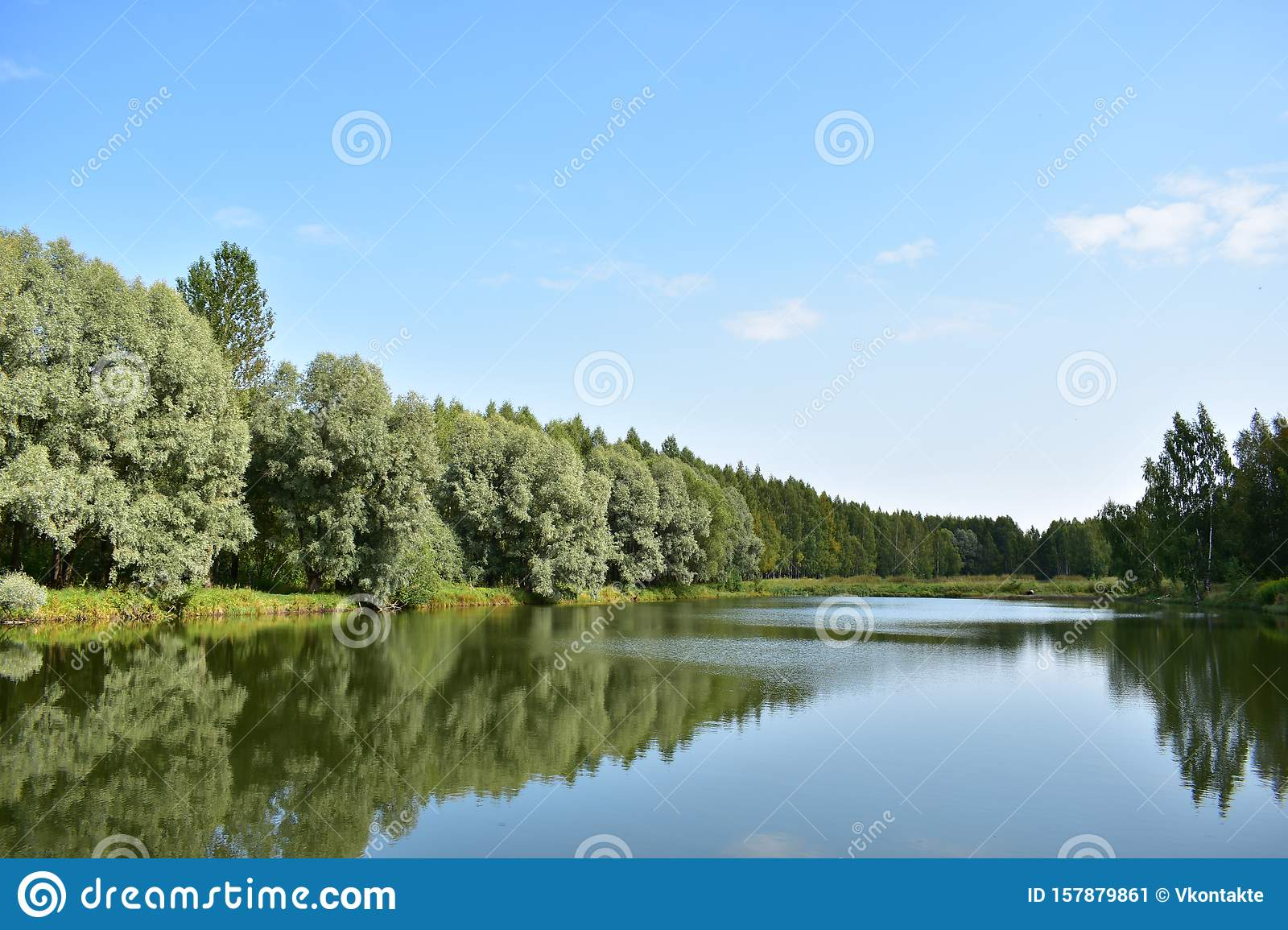 Forest Lake In The Water Reflected Growing On The Banks Of The Trees Glossy Leaves Of The Silver Willow, Curly Birch Grove Stock Image - Image of ...