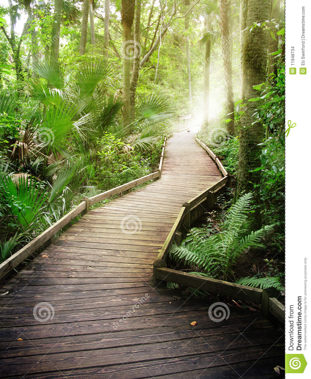 Forest path stock photo Image of nature wood tropical